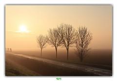 POLDERLANDSCHAP van WEST-VLAANDEREN // ADINKERKE (5) (régisa) Tags: sunrise lever soleil arbre adinkerke westvlaanderen belgique belgië landscape paysage polder landschap