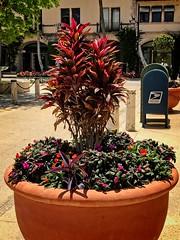 Urban Gardening (LarryJay99 ) Tags: palmbeach urban reets streets bollards containergardening pots urbangreenery urbanfoliage streetfurniture urbancontainers urbanvistas scapes reds colors plants foliage green