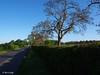 Walnuts in the hedgerow (mark.griffin52) Tags: olympusem5 england buckinghamshire cheddington mentmoreroad countryside hedge boundary walnuttrees walnut trees hedgerow road