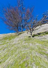 Sunol Ridgeline 03 (CDay DaytimeStudios w/1,000,000 views) Tags: bluesky california eastbay eastbayregionalparks grass grassland hillside ridgeline sanfranciscobayarea sf sunolca sunolpark sunolregionalpark sunolvalley trees winter