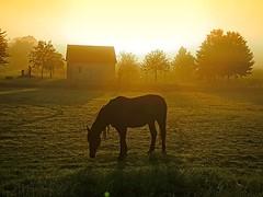 Strange days ... (Tobi_2008) Tags: pferd horse sonnenaufgang sunrise landschaft landscape sachsen saxony deutschland germany allemagne germania haus house diamondclassphotographer