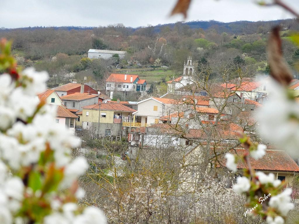 Águas Frias (Chaves) - ... a Aldeia enquadrada com flores de cerdeira (cerejeira) ...
