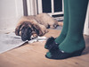 Puppy with face on pee pad - Credit to https://www.thehousewire.com/ (TheHouseWire) Tags: adult animal ashamed canine cute dirty dog feet female floor furry guilty home house housebreaking indoors interior legs leonberger mammal mess messy naughty pad pee person pet puppy shame shoes slippers training urine woman young