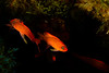 La Gabinière - Prot-Cros - 22/04/2018 (YackNonch) Tags: méditerranée nauticamna7d plongéesousmarine nauticam ssysd1 ef ef815mmf4lfisheye parcnationaldeportcros scubadiving ss action lagabinière canon scuba diver france plongeur canoneos7d plongée app diving eos na7d portcros bormesplongée anthias aubagne aubagneplongéepassion dive lieu 7d macro hyères provencealpescôtedazur fr