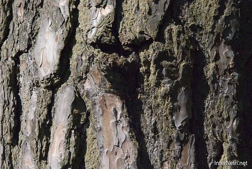 Шацький Національний Природний Парк Озеро Пісочне Стовбури дерев InterNetri  Ukraine 372