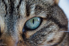 regard chat (Stei&Helvi) Tags: chat cat animal sony alpha