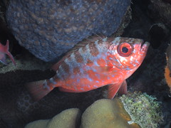 Bonaire diving 2018 (Valerie Hukalo) Tags: poisson fish patrickhukalo diving plongée underwaterphotography photographiesousmarine buddysreef hukalo bonaire antilles caraïbes paysbas buddydiveresort