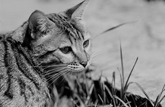 Toto (graemes83) Tags: pentax kodak eastman 5222 double x xx film 35mm 135 d96 black white monochrome