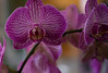Orchidées de Juliette (bd168) Tags: flower juliette orchid bokeh grosplan closeup xt10 xf50mmf2rwr