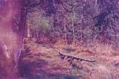Huis ter Heide (Der Ohlsen) Tags: kodakultrazoom einwegkamera singleusecamera analog 35mm kb expired colour film c41 huisterheide tilburg netherlands niederlande