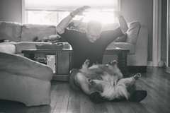 Belly Scratches! (flashfix) Tags: may302018 2018inphotos ottawa ontario canada nikond7100 40mm flashfix flashfixphotography portrait cat feline whiskers ears kittynose fyero nebelung ragamuffin ragdoll fluffy graycat sock dog canine animal pet austrailanshepherd triaustrailanshepherd bluemerle tricolour heterochromia blackandwhite monochrome man pets belly