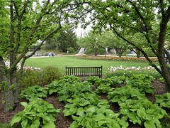 Lombard, IL, Lilacia Park, Central Square (Mary Warren 13.6+ Million Views) Tags: lombardil lilaciapark garden park nature flora plants green trees leave foliage bench steeple blooms blossoms flowers tulips