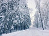Winter wonderland -18C... (Elisabeth Redlig) Tags: elisabethredlig snow winter nature roads trees sweden north nordic cold blue europe landscape sky scenery outdoors