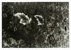 (Ko.Fe.) Tags: bessar2m voigtländer ilford hp5 hc110 palkx513cholorobromidemedweightgrade35x7 darkroomprint gelatinsilverprint analogprinting film summicron50v4