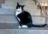 ClaireFisher (allybeag) Tags: xperia phone phonepic clairefisher cat stair step
