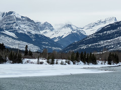 On the way to Canmore - seven Swans a-swimming :) (annkelliott) Tags: alberta canada wofcalgary birdingtrip rockymountains canadianrockies seebedam nature scenery landscape mountain peak slope tree trees forest river water ice snow bird birds trumpeterswan canadagoose outdoor winter 24march2018 canon sx60 annkelliott anneelliott ©anneelliott2018 ©allrightsreserved