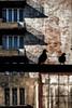 Where pigeons dare (Paweł Szczepański) Tags: katowice śląskie poland pl tistheseason trolled legacy sincity pinnaclephotography