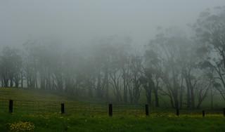 Misty Big Island #htmt