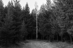 Different (Lux Obscura) Tags: trees forest blackwhite noirblanc bw nb nature