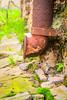 (Liane FKL) Tags: photographie photography colors couleurs printemps spring détail architecture pipe tuyau rouille dust
