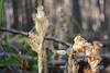 DSC_9466 (sevbette) Tags: лес осень чудесаприроды