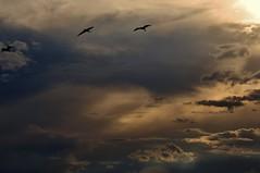 Feliz Semana... (Ruby Ferreira ®) Tags: birds silhouettes litoral pássaros silhuetas clouds nuvens céu sky