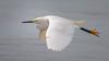 MamaMadeMeWearBoots (jmishefske) Tags: 2018 d850 nikon lakefront water flying milwaukee grant june southmilwaukee flight bif bird wisconsin beach park snowy egret county lakemichigan
