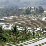Jatiluwih Rice Terraces, Bali thumbnail