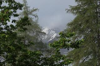 forêt, brume et montagne