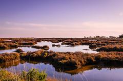 Ria Formosa 285 (_Rjc9666_) Tags: algarve coastline colors flowers flowersplants lagoon landscape montenegro nature nikond5100 park places portugal riaformosa sea seascape sky sunset tamron2470f28 water wildlife ©ruijorge9666 faro pt 2175 285