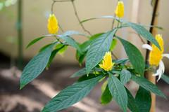 - (≡ Matthias) Tags: italien italy italia sizilien sicily sicilia 2018 flowerscolors siz18 nikon d800 catania 2470mmf28g nikkor n2470d800
