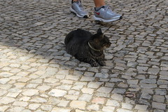 IMG_1999 Carmo Convent - the resident cat being admired by all (drayy) Tags: carmoconvent museum cat gato thebiggestgroupwithonlycats trip travel europe portugal lisbon