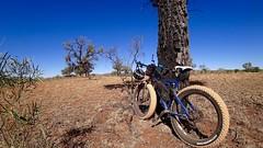 Day 4, Desert oak and bike