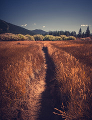 A trail in a open field in a Martis Creek Trail with mountains in the horizon in a sunny blue sky day in Truckee, California. (pedferr) Tags: horizon lines usa color sunset nature view vertical truckee moody rural trails orange mountain bluesky california summer sunrise warm scenery tahoe symmetry morning outdoors unitedstatesofamerica sky landscape sunny field
