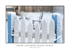 Snow covered picket fence in light falling snow (sugarbellaleah) Tags: snow snowflakes snowing picketfence fence closeup oberon winter snowy chilly cold freezing australia