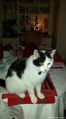Mon, Jun 18th, 2018 Lost Male Cat - Saran Wood, Bray, Wicklow (Lost and Found Pets Ireland) Tags: lostcatsaranwoodwicklow lost cat saran wood wicklow june 2018
