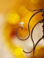 Street lamp (miss gecko) Tags: lamp waterdrop reflection bokeh light macro sundaylights macrodreams