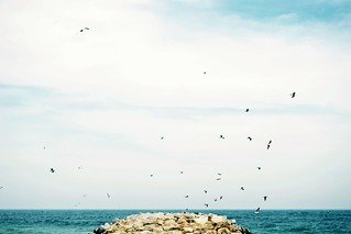 Blue sea, blue sky & a blue mind