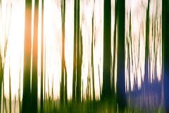 trees (jenskretschmer) Tags: trees art abstract colors wood light move rotation exposure kunst verfremdung drehung bewegung farben bäume wald fujifilm xe2 fuji pentacon 50mm f18 vintagelens
