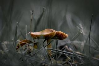 Mushroom ... �