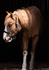 Horse with no name (Modymark) Tags: horse stable