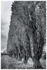 DSC_4171-Mr-2 (gillesporlier) Tags: trees tree horizon arbre arbres ligne line monochrome blackandwhite noiretblanc bw nikon d7100 autumn saison sky cloud nuage ciel profondeur deep