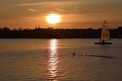 Bird and boat race - Explore 22/4/2018 (MJ Harbey) Tags: sunet boat water sky bird lake tree caldecottelake miltonkeynes buckinghamshire nikon d3300 nikond3300 reflection