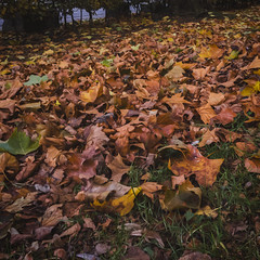 IMG_20171106_143914 (1)-Edit-1 (HoxPox) Tags: koln cologne germany travel street streets walk walking exploring streetart streetphotography red light wait movement picoftheday pic camera vacation free cloudy autumn leaf messy colors ground beautiful different