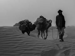 Walking in the desert storm