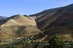 Curvas e contra curvas!! (puri_) Tags: monte socalcos vinhas estrada castanho outono arvores