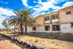 Some palm trees outside the abandoned school.