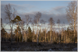 20180317_7034_Forest