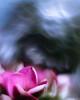 Purple Abyss (Marcello Velasco) Tags: flower macrophotographer macrophotography macro macrophotograph flowerphotography