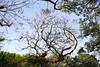 樹爪 (moseskim27) Tags: contaxaeg25mmf28 taiwan zhubei distagon t carlzeiss cy 竹北 f4 tree park germany
